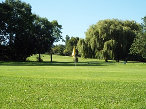 Yellow Hole 8 Green
